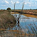 Reflection by Image Takers Photography LLC