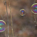 Reflection In Bubbles by Leah Palmer