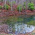 Reflection In The Lake by Dawn Gari