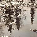 Reflection by Jennifer Kimberly