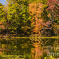 Reflection Of Autumn by Elvis Vaughn