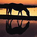 Reflection Of Life by De Beall