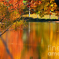 Reflection  Of My Thoughts  Autumn  Reflections by Peggy Franz