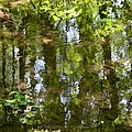 Reflection Of Woods by Sonali Gangane