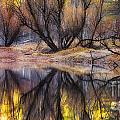 Reflections by Anthony Bonafede