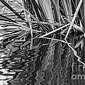 Reflections In Black And White by Kate Brown