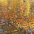 Reflections In Gold by Ira Shander