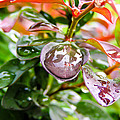 Reflections In Raindrops by Cynthia Woods