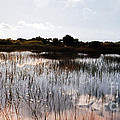 Reflections In The Everglades  by Lydia Holly