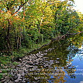 Reflections In The Stream by Debbie Nobile