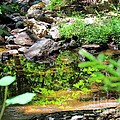 Reflections In The Stream by Elizabeth Dow