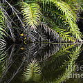Reflections Marimbus River Brazil 2 by Bob Christopher