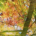 Reflections Of A Colorful Fall 001 by Robert ONeil