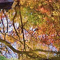 Reflections Of A Colorful Fall 002 by Robert ONeil