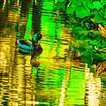 Reflections Of A Mallard Duck by Michael Moriarty