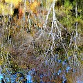Reflections Of Fall 5 by Ed Weidman