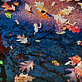 Seasons Of Refletion by Sandra Selle Rodriguez