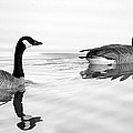 Reflections Of Geese by Jason Politte