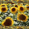 Reflections Of Sunflowers by Nikki Keep
