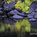 Reflections Of Yellow And Green by Mitch Shindelbower