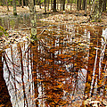 Reflections On A Forest Floor by Mary Lee Dereske