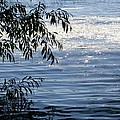 Reflections On The Lake by Mary Wolf