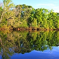 Reflections On The River by Debra Forand