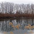 Reflections From Minnesota by Stephanie Hanson