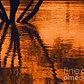 Reflectivity by Heather Kirk