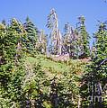 Reforestation by Bob Phillips