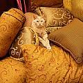 Regal Feline by Amy Cicconi