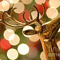 Regal Reindeer by Amy Cicconi