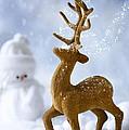 Reindeer In Snow by Amanda Elwell