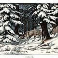 Reindeer by Splendid Art Prints