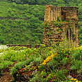 Reinfels Castle Ruins And Wildflowers In The Rhine River Valley 1 by Greg Matchick