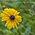 Rejoice In Hope by Bill Barber