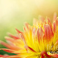 Rejoice by Beve Brown-Clark Photography