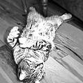 Relaxing Cat by Susan Leggett
