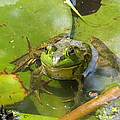 Relaxing On A Lily Pad  by Tom Gari Gallery-Three-Photography