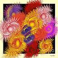 Feathers by Iris Gelbart