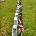 Remembering Veteran's Day by Shannon Louder