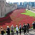 Remembrance Poppies At Tower Of London by Julia Gavin