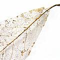 Remnant Leaf by Ann Horn