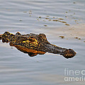 Reptile Reflection by Al Powell Photography USA