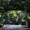 Residential Street St Simons Island by Kathryn Meyer
