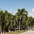 Resort Pathway by Luis Alvarenga