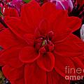Resoundingly Red by Arlene Carmel