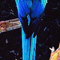Resplendant Quetzal Of Costa Rica by Glenn Aker
