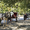 Rest Stop - Central Park by Madeline Ellis
