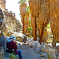 Rest Stop In Andreas Canyon Trail In Indian Canyons-ca by Ruth Hager